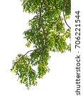 green leaf on light | Shutterstock . vector #706221544