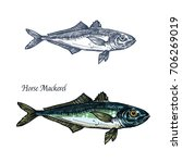 horse mackerel fish vector... | Shutterstock .eps vector #706269019