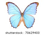 Stock photo black and blue butterfly morpho didius isolated on white background 70629403
