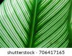 calathea | Shutterstock . vector #706417165