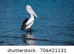 Pelican In The Bay   Saratoga...