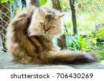 cat | Shutterstock . vector #706430269