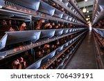 factory chicken egg production. ... | Shutterstock . vector #706439191
