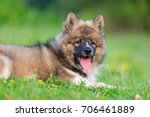 portrait of a cute elo puppy... | Shutterstock . vector #706461889