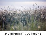 landscape with wheat spikes on... | Shutterstock . vector #706485841