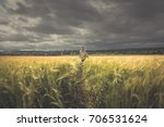 Girl Walking Through Crop Field ...