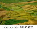 Rice Season Ripe On Terraced...