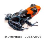 poison dart frog with red head  ... | Shutterstock . vector #706572979