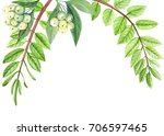 greeting card  set acacia... | Shutterstock . vector #706597465