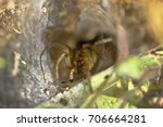 Small photo of Wolf Spider (lycosidae) on spider web