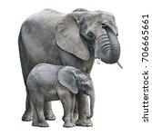Stock photo elephant mother and baby on white background elephant isolated 706665661