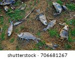 mass fish death due to global... | Shutterstock . vector #706681267