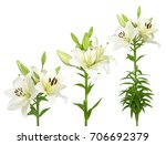Wonderful White Lilies Isolate...
