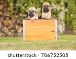 Stock photo cute puppies 706752505