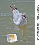 Small photo of A herring gull protecting a polystyrene food container by squawking to warn off other birds.