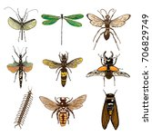 Set Of Insects Bugs Beetles An...