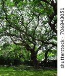 big old tree in the garden | Shutterstock . vector #706843051