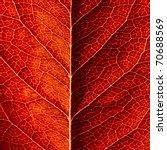 Series Of Leaf Textures In...