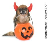 halloween pumpkin and chihuahua ... | Shutterstock . vector #706895677
