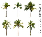 coconut trees on white... | Shutterstock . vector #706926919