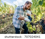 young adult man harvesting red... | Shutterstock . vector #707024041