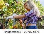 young woman harvesting red... | Shutterstock . vector #707025871