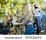 young woman harvesting red... | Shutterstock . vector #707028355