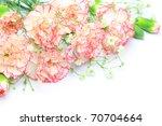 carnation | Shutterstock . vector #70704664