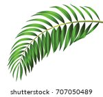 green leaf of palm tree... | Shutterstock .eps vector #707050489