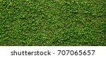 Green Creeper Of Bush On Wall...