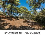 state forest of olonne in les... | Shutterstock . vector #707105005