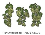 vintage designs set with hops... | Shutterstock .eps vector #707173177