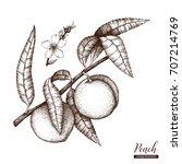 vector peach tree vintage... | Shutterstock .eps vector #707214769
