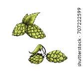 sketched hop engraved in ink...   Shutterstock .eps vector #707222599