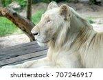 White Lion At Khao Kheow Open...
