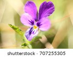 Beautiful Flower Violet Close...