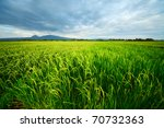 Rice Terrace And Mountains On ...