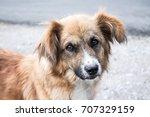 Small photo of Stray dog look pity