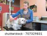 Stock photo taking care of a pet 707329831