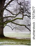foggy weather in early winter | Shutterstock . vector #7073677