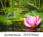 Little Cute Frog In A Pond Wit...
