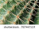 closeup of cactus               ... | Shutterstock . vector #707447119