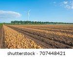 onions on a field in sunlight...