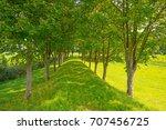 trees along a field in sunlight ... | Shutterstock . vector #707456725