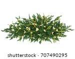 mistletoe and juniper fir...   Shutterstock . vector #707490295