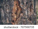 Dry Fern On Tree Bark...