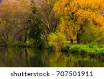 Forest With Yellow Foliage Nea...