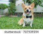Corgi Dog In A Tuxedo Collar