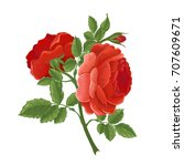 english  red rose graphic... | Shutterstock .eps vector #707609671