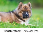 Stock photo outdoor portrait of a cute elo puppy 707621791